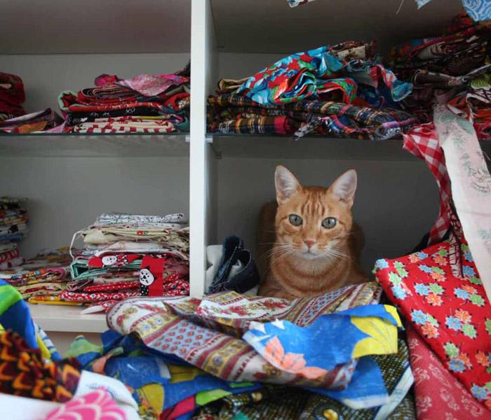 Fabrics-+-cat