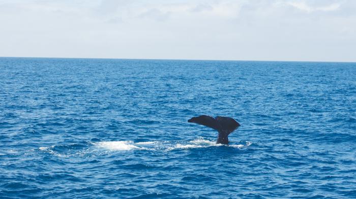 Bloesem kids | Bloesem Gazette: Family vacation to New Zealand | Kaikoura Whale Watch